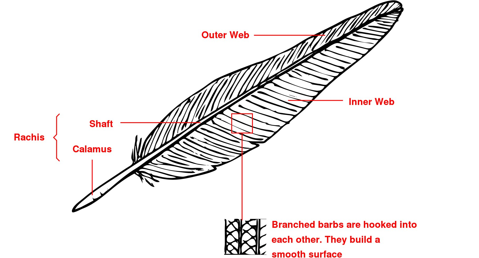 Structure of a