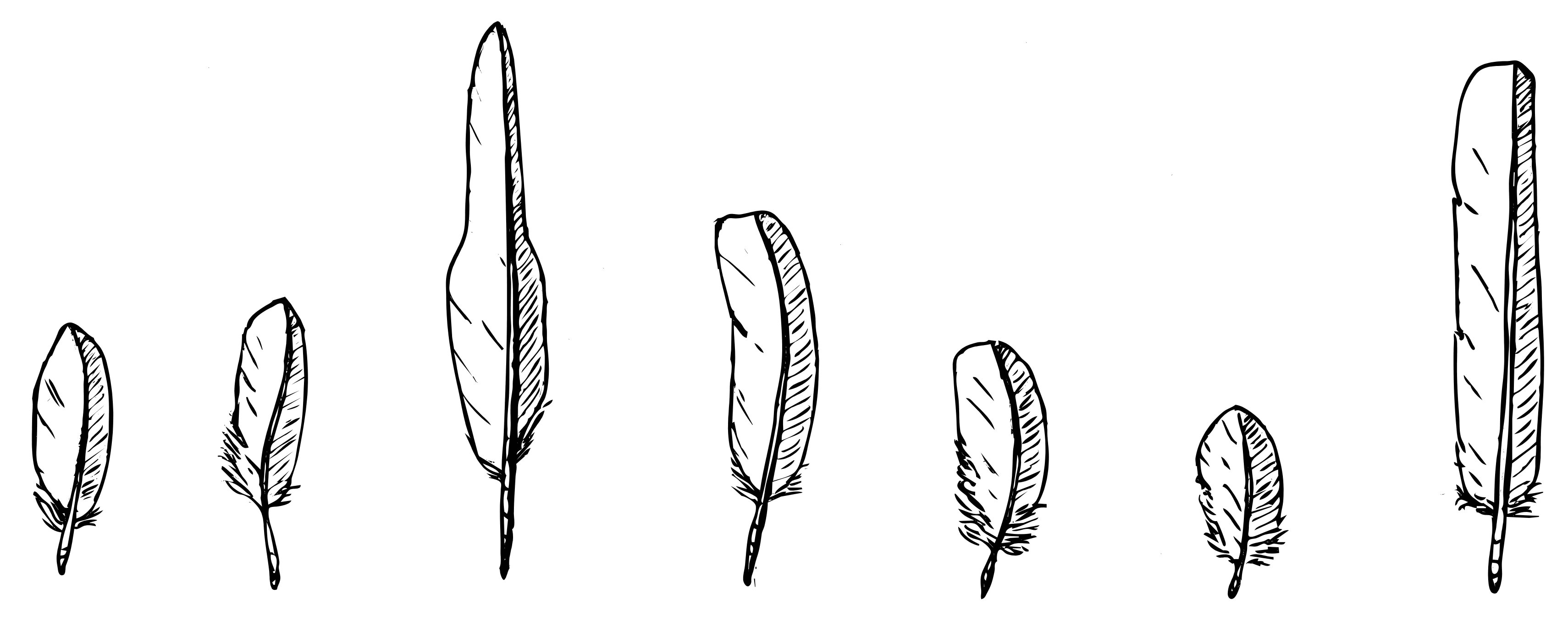 Sparrowhawk feathers